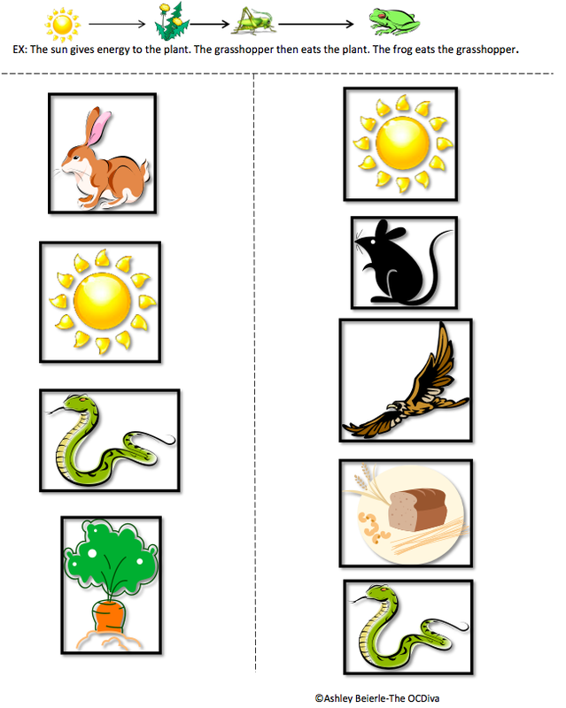Food chain and food web printable worksheets